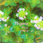 タイム THYME